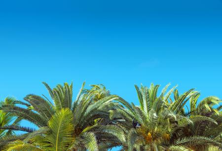 Fresco, verde, palma, sopra, chiaro, blu, cielo
