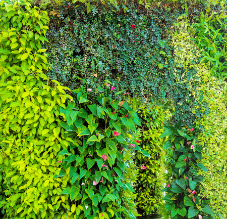 Green various creeper fern and lush plant on wall. Nature and environment concept