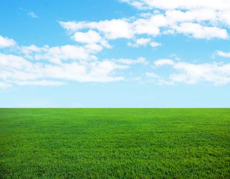흐린 하늘과 신선한 녹색 잔디의 배경