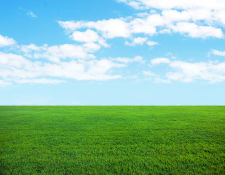 Background of cloudy sky and fresh green lawn
