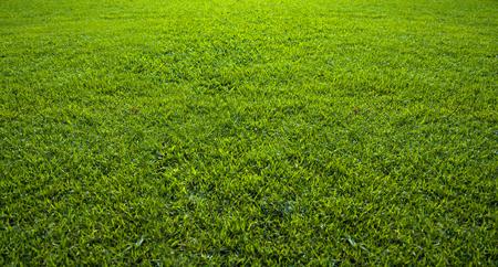 美しい緑の芝生パターンの背景