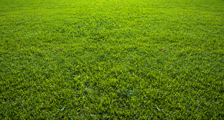 Background of a beautiful green grass pattern