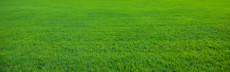 Background of beautiful, fresh green grass pattern 版權商用圖片