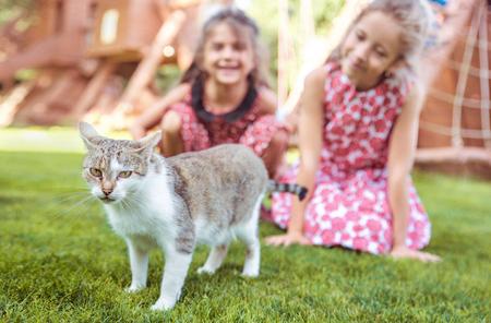 Due ragazze allegre guardando il gattino calmo