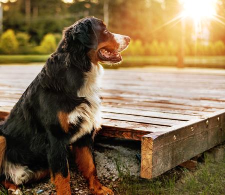 Ritratto di un animale domestico amichevole calmo nel giardino