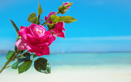 Tropical, red flower over an oceans view