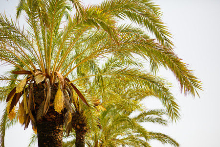 field depth: Palm trees against bright sky with shallow depth of field. Stock Photo