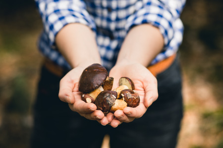 bolete: Close-up of young womens hands holding a small Bay Bolete mushrooms with shallow depth of field.