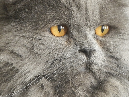 Photo portrait, close-up on cat whiskers and eyes photo
