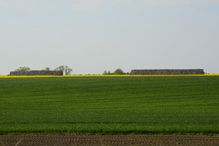 Image of landscapes spring and blooming rape fields photo