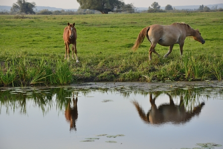 pozo de agua: Caballos en pasto verde