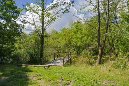 wooden bridge: wooden bridge over a green overgrown pond