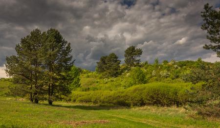 fields and meadows: tormenta que se avecina la primavera en los campos, prados y pastizales
