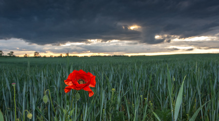 storm coming: coming spring storm over the fields meadows and grasslands Stock Photo
