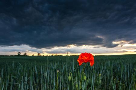precipitacion: tormenta que se avecina la primavera en los campos de prados y pastizales