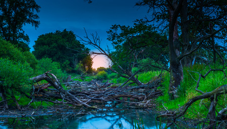 oxbow: The old riverbed filled with trees. The nature park guard bend, near Santok. Stock Photo