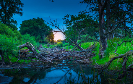 oxbow: The old riverbed filled with trees, nature park, near Santok, Poland