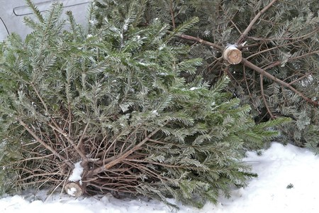 dreary: Christmas trees are put down at a street after the feast