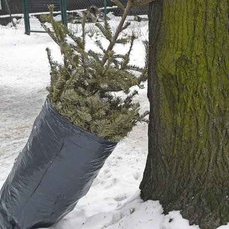 sadly: Un albero di Natale � messo gi� una strada dopo la festa
