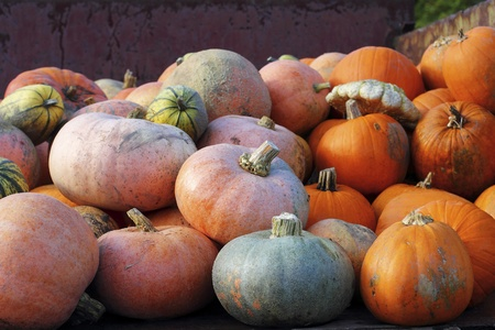 Various species of pumpkins on the loading space of a harvest-wagon photo