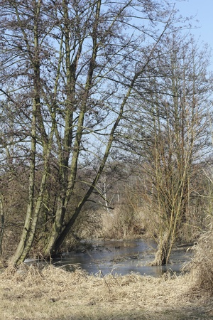 Wetlands and meadows in the riparian zone of the Tegeler Fliess in Berlin, the German capital Stock Photo - 12570756