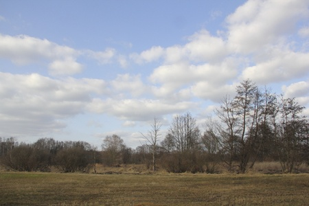 Wetlands and meadows in the riparian zone of the Tegeler Fliess in Berlin, the German capital Stock Photo - 12570220