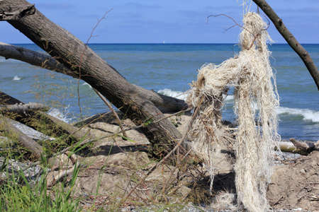 waif: Uprooted trees and jetsam on the Baltic island of Ruegen