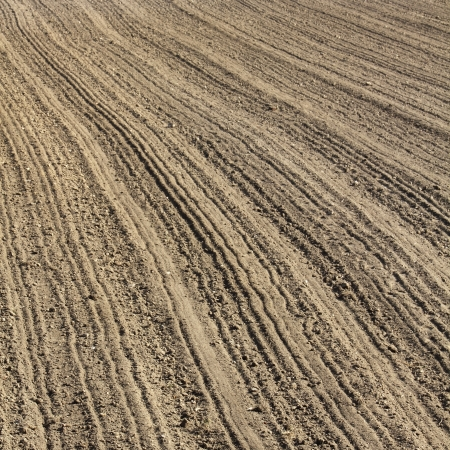 Furrows  in early spring photo
