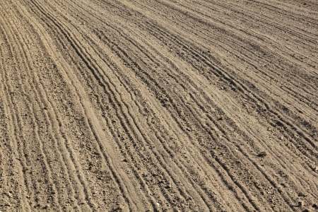 furrows: Furrows in early spring
