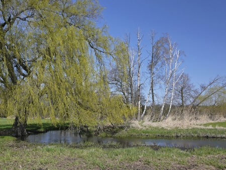 Dead trees and fresh green in a riparian forest photo