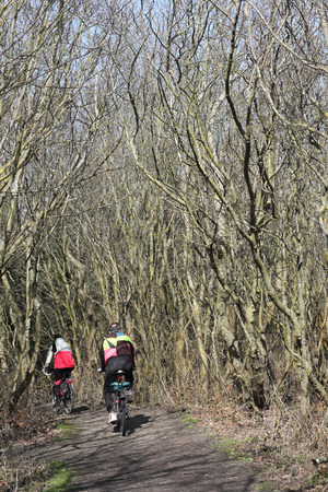 bikeway: In a grove among the dunes of the island of Sylt