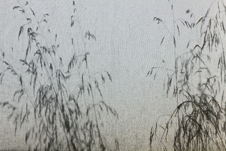 show plant: Shadow of grasses on canvas outdoor