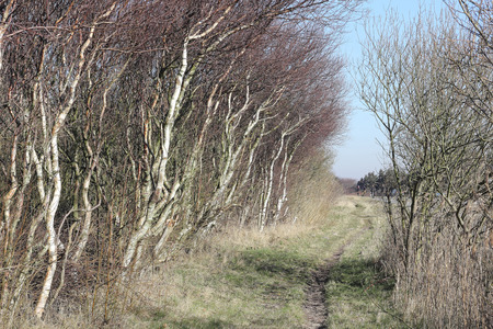 windswept: Wind-swept trees along a country road Stock Photo