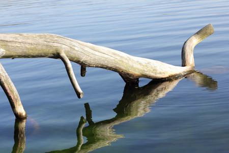 Dead tree at lakeside