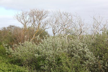 arboles secos: Los �rboles muertos y verde fresco