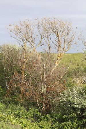 bird sanctuary: Dead trees at a Bird sanctuary Stock Photo