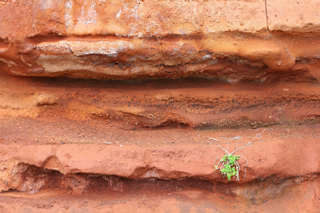 stratification: Red tuff, overgrown with a tussock of Sea Sandwort on the Atlantic island of Madeira; selected focus, narrow depth of field Stock Photo
