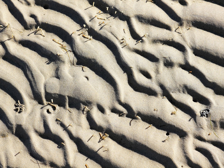 Worm tracks in the tidal flats of the North sea at low tide