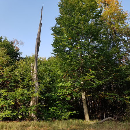 Autumnal forest and old dead tree