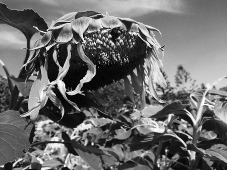 catastrophe: Plants in catastrophe
