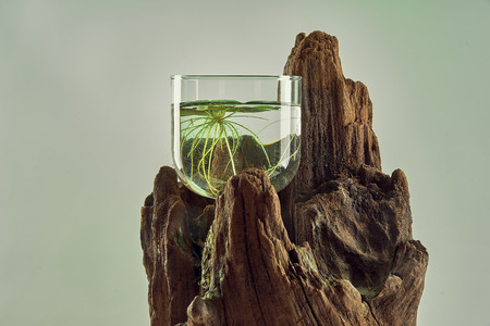 A living flower in a glass with water on a tree, on a beautiful gradient colored background.