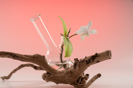 Anti-Smoking composition of Orchid, water, Bong, wooden branches and sand on a gradient colored background.