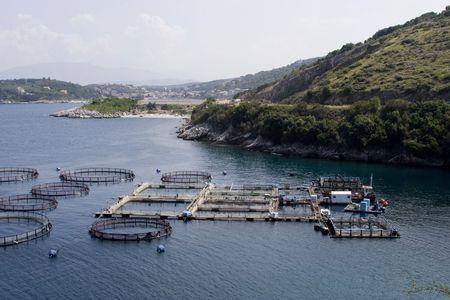ichthyology: sea fish farm pond shellfish oyster seafood