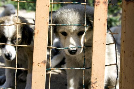 two puppies look through the bars of a cage photo