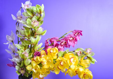 Orchids different colors, colorful flowers mixed colors, greenhouse in Holland. Perfect backgroung Stok Fotoğraf