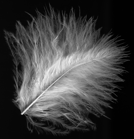 macro shot of little feather photo