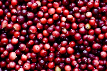 Red ripe cranberries background  photo