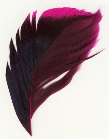 macro shot of feather Stock Photo - 15771592