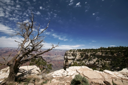 dead tree in Grand Canyon,  Arizona, USA photo