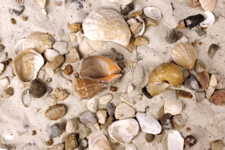 Sea Shells in sand photo